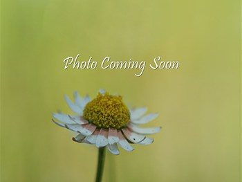Photo-Coming-Soon (1)